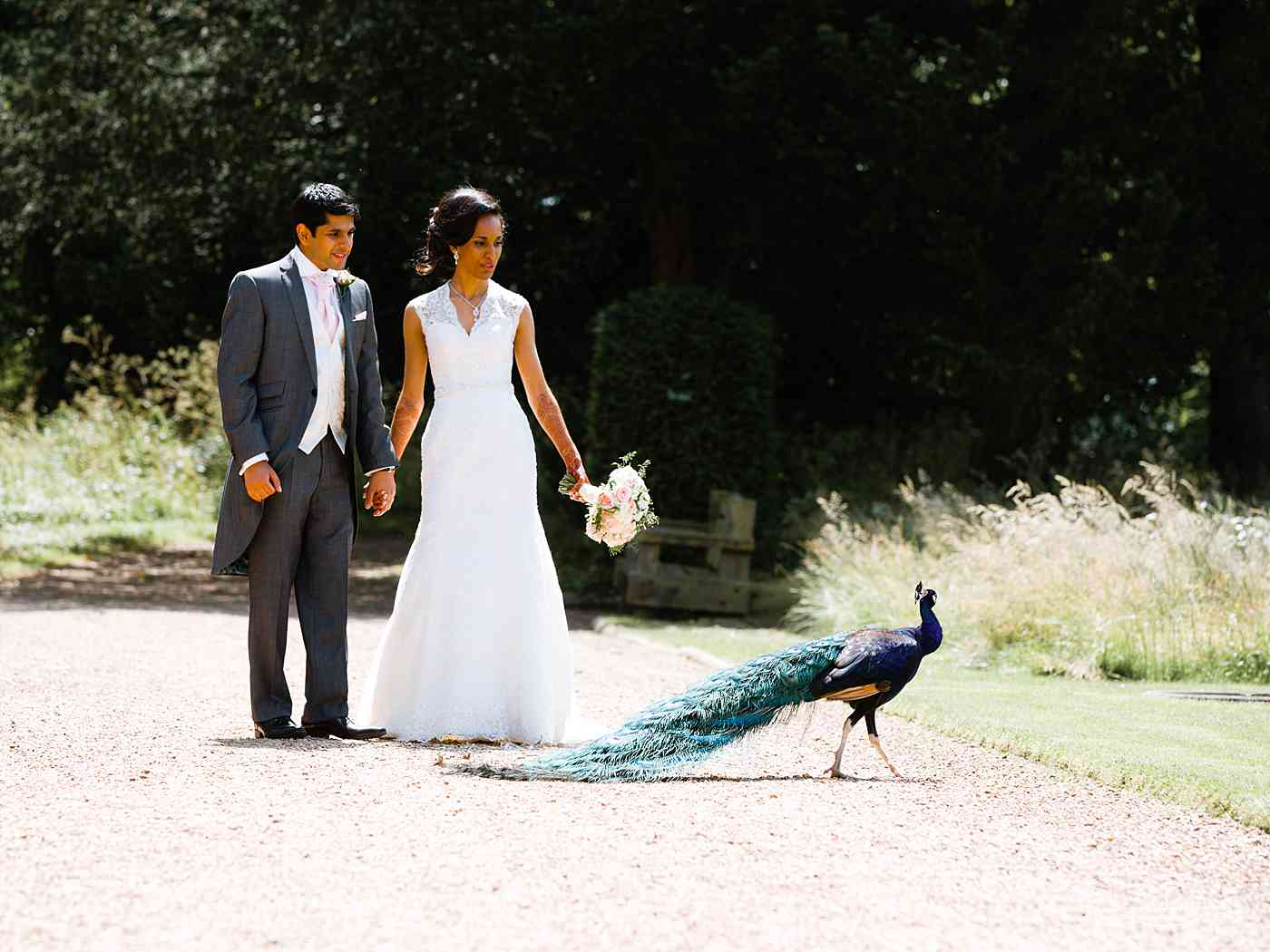 Ragley Hall peacock walking past Indian bride and groom