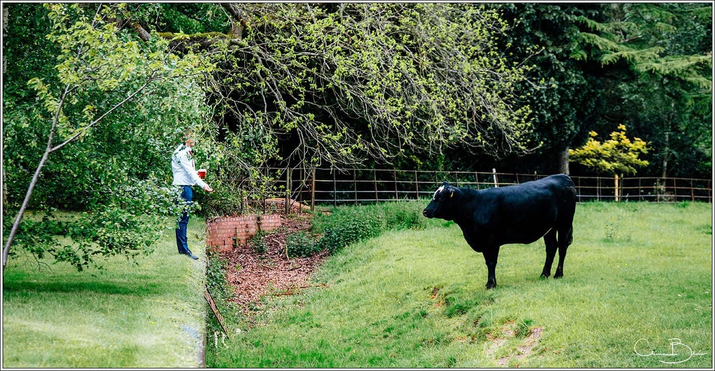 Guest with cow at Pendrell Hall as photographed by a recommended Pendrell Hall photographer