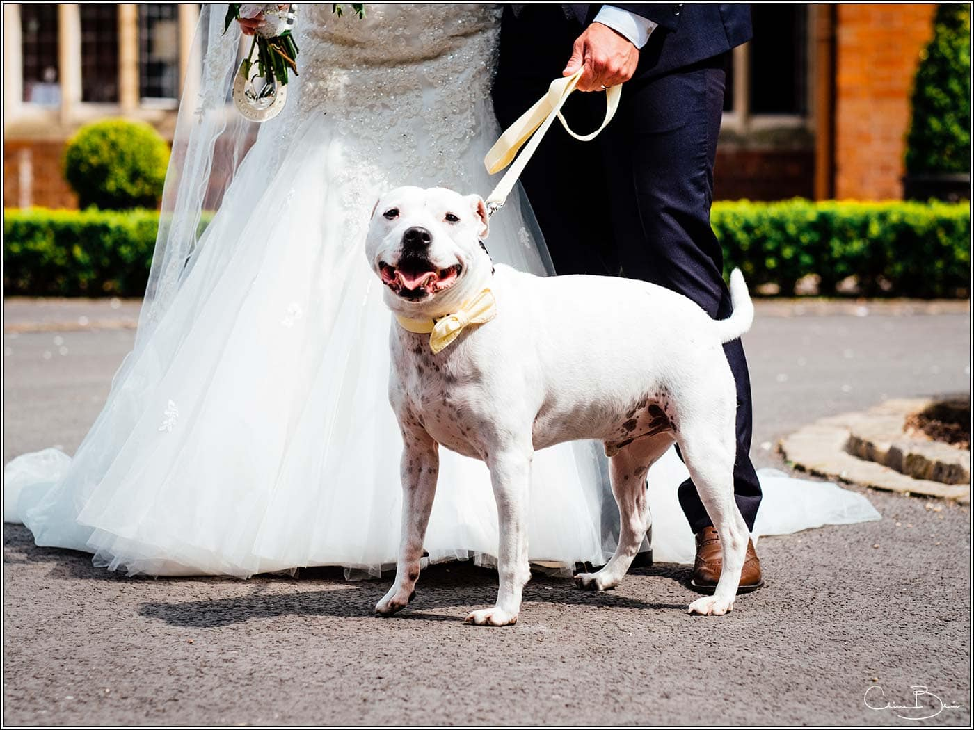 Bride and groom's dog at their wedding by Pendrell Hall wedding photographer Clive Blair Photography